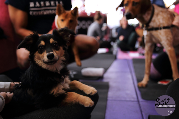 yoga_dogs1_web.jpg