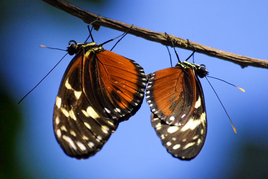 EdJohnston-Two-Butterflies-9290w.jpg