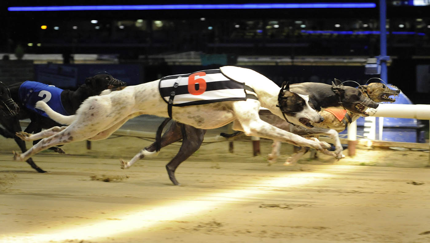 Identical sectional time of 3.63 for the three front runners, as Solway View (t6), Bandit Blue (t3) and almost hidden winner Me Buddy (t1, far side) race to the bend in unison in the Coral UK Standard on Friday night. Romford 23.10.09Pic Steve Nash