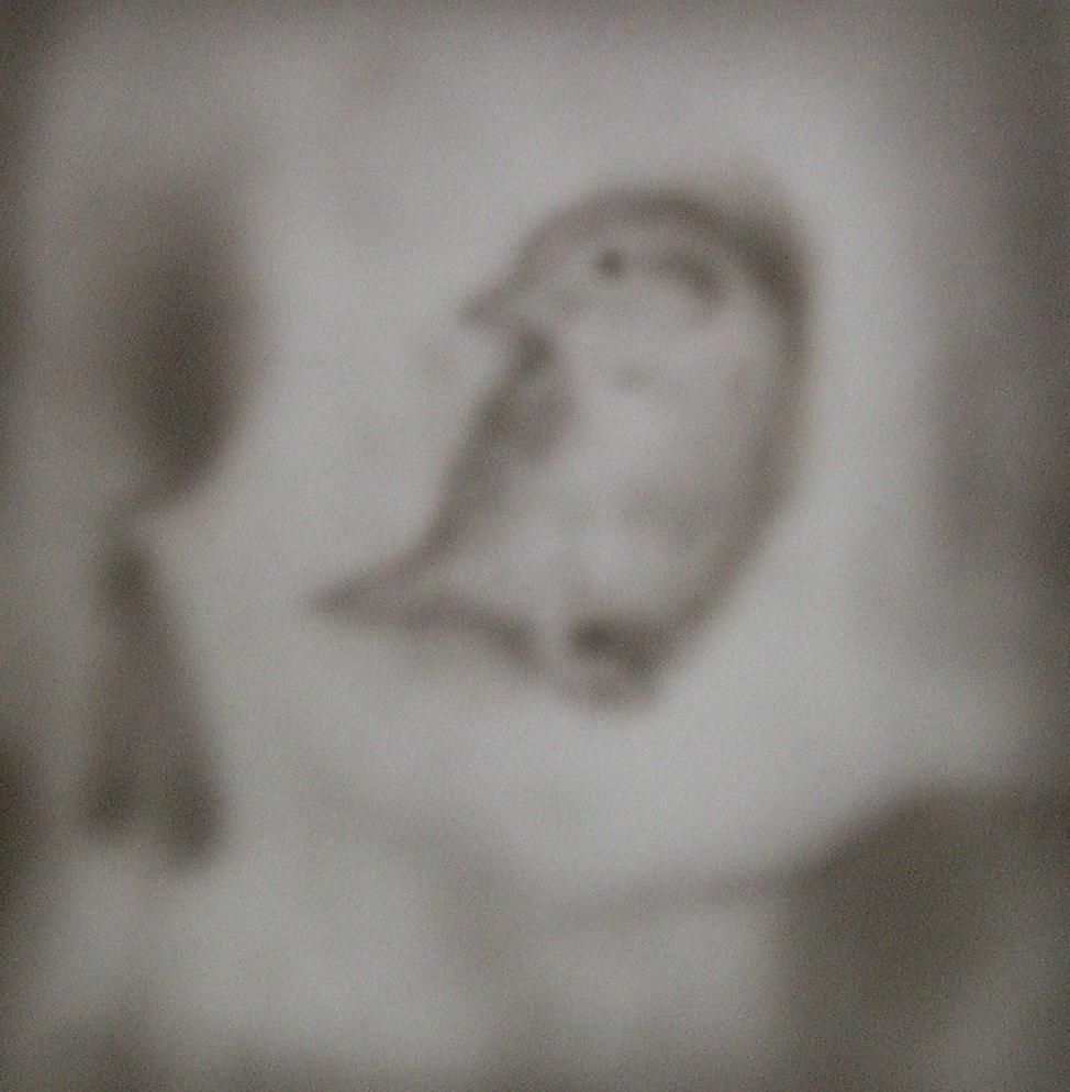 Bird Nesting in Skull