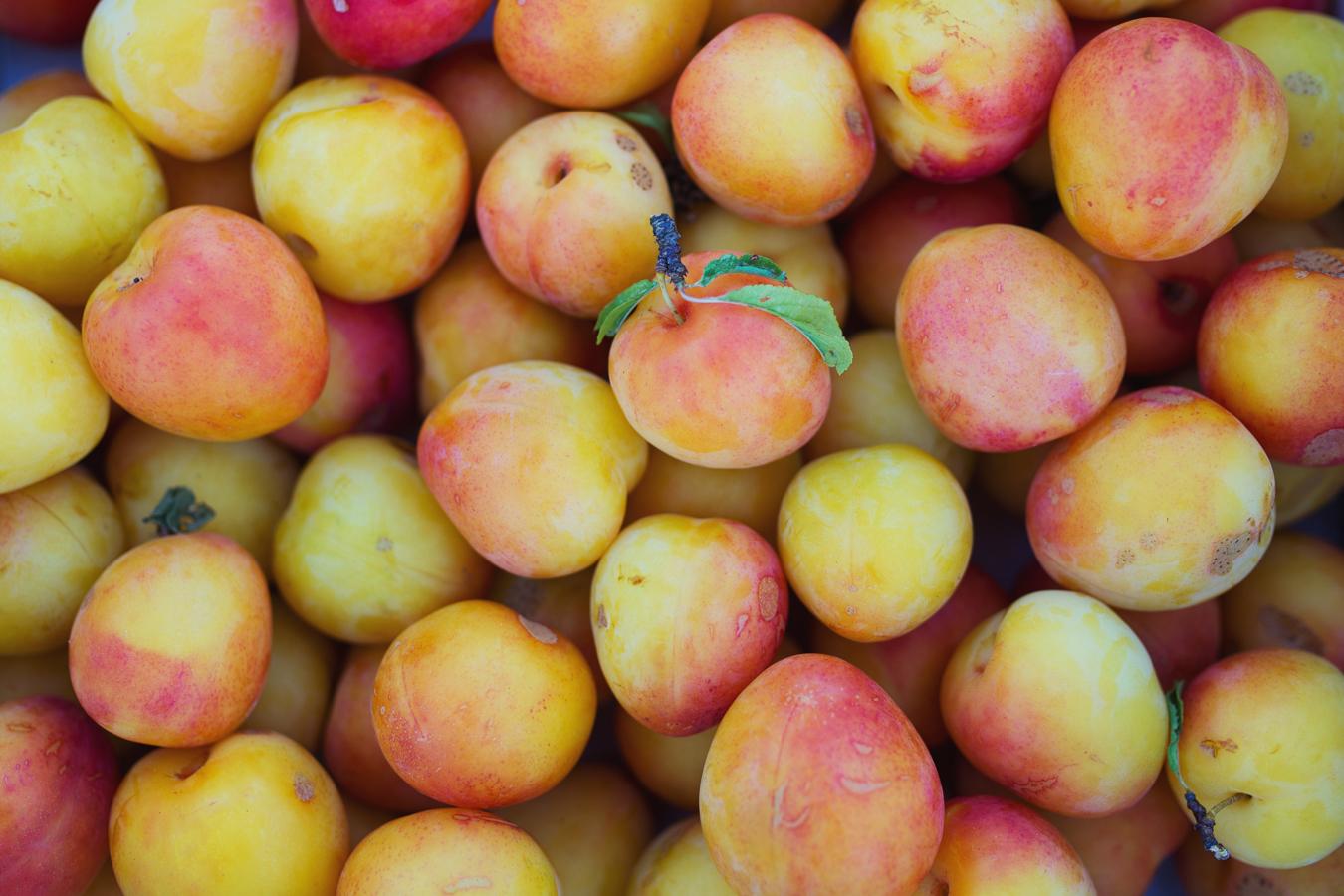 plums (8 of 31).jpg