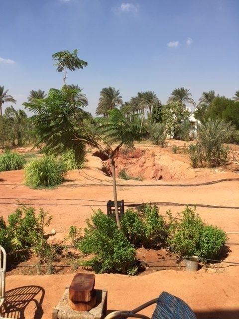 Dalia's organic farm outside Cairo