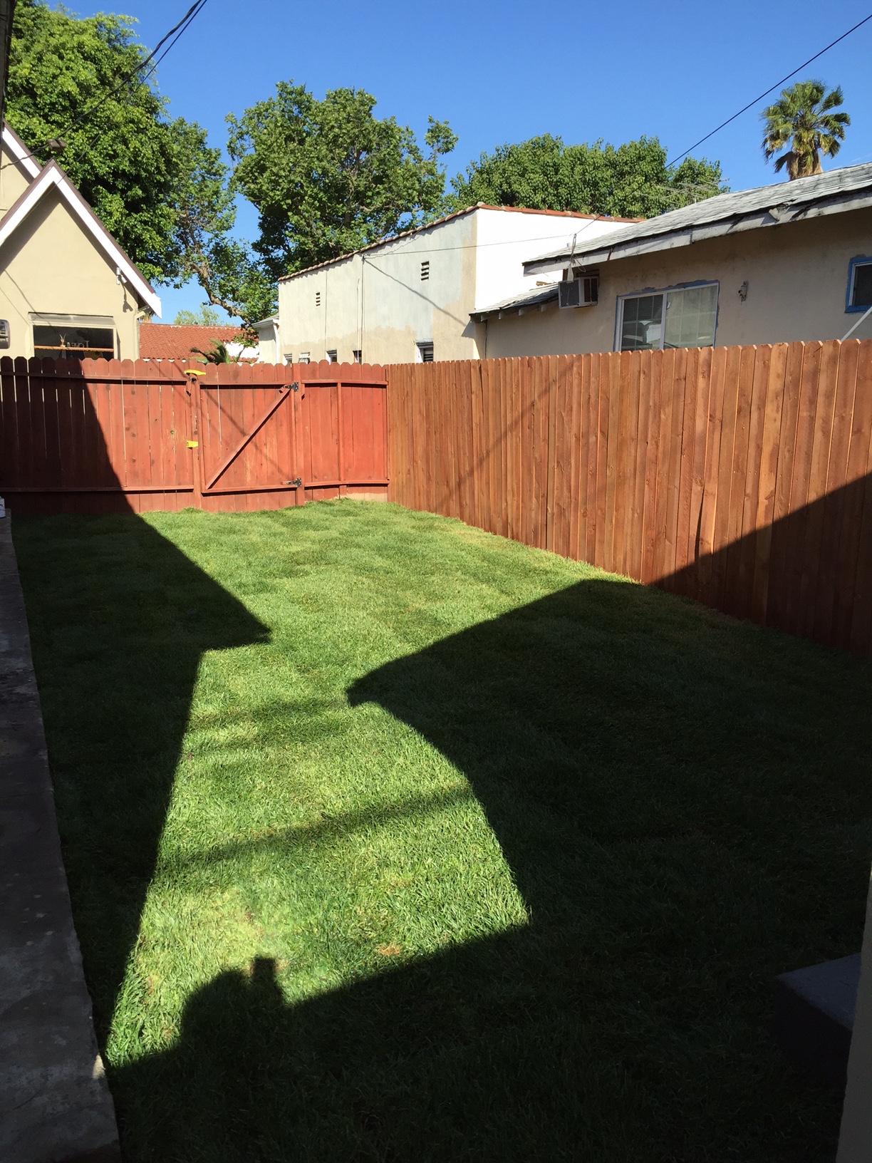 Side yard.jpg