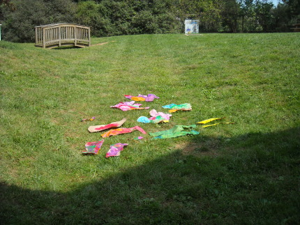 Sea Creatures Drying in the Sun