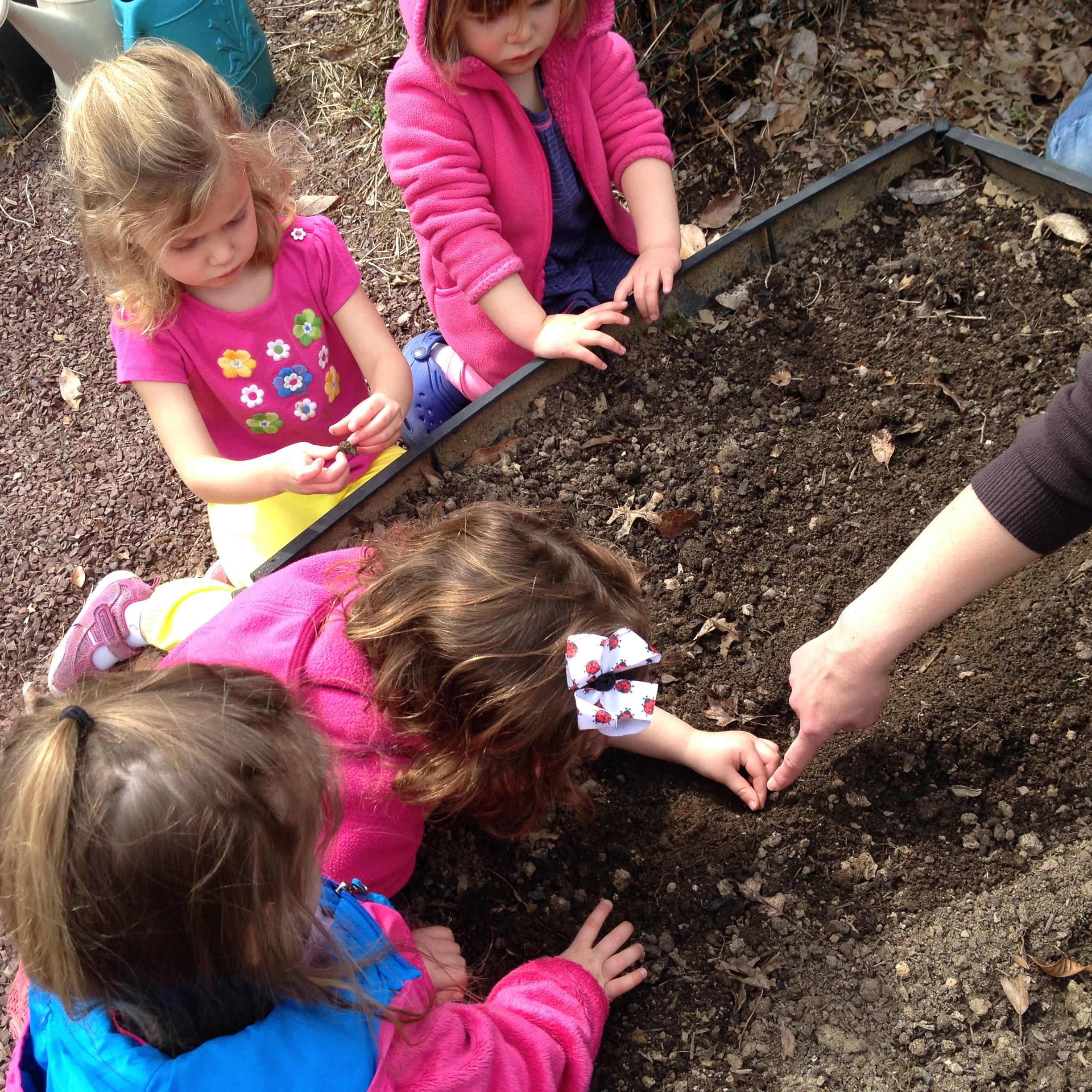 Planting seeds in our Ladybug garden