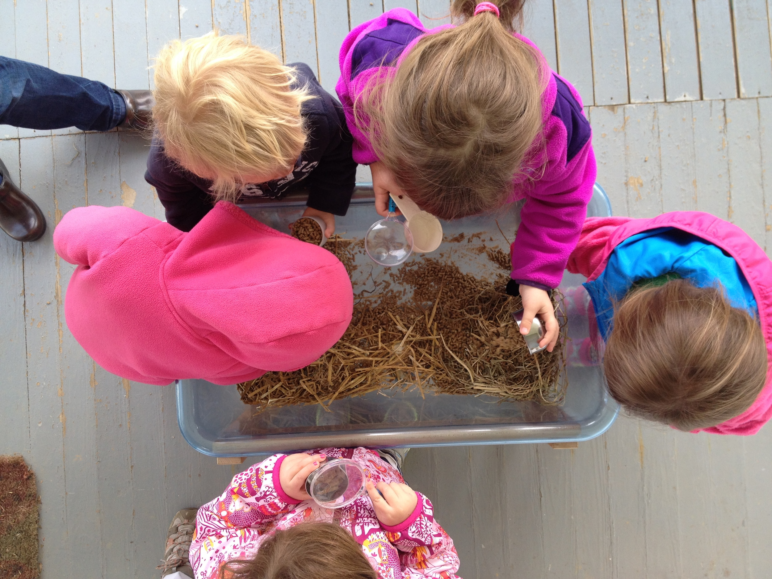 Farm-themed sensory table discovery
