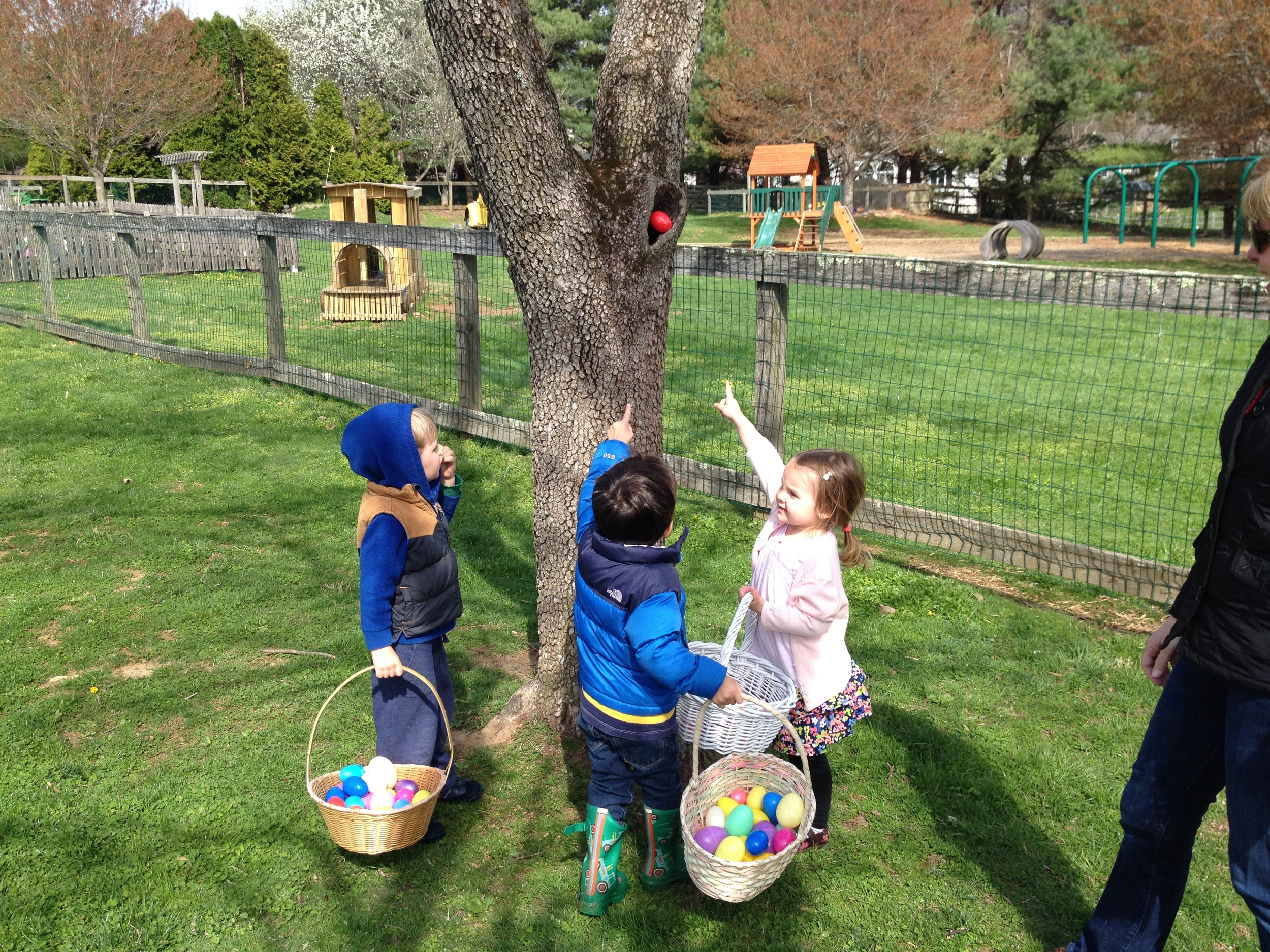 Look-- there's an egg hiding in the tree!