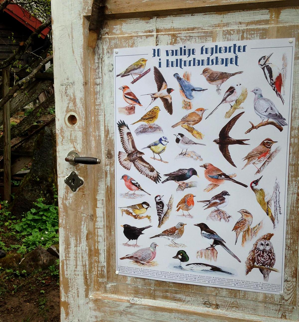 fugleplakat på dodøra.jpg