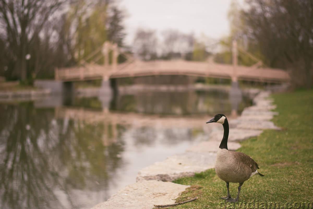 Victoria-Park-Engagement-Photography-Kitchener-004.jpg