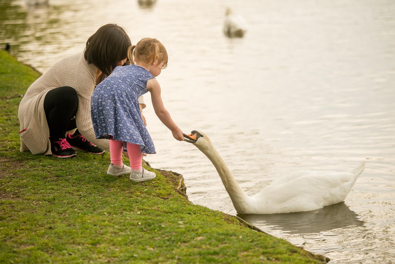 mother-daughter-feeding-swans.jpg