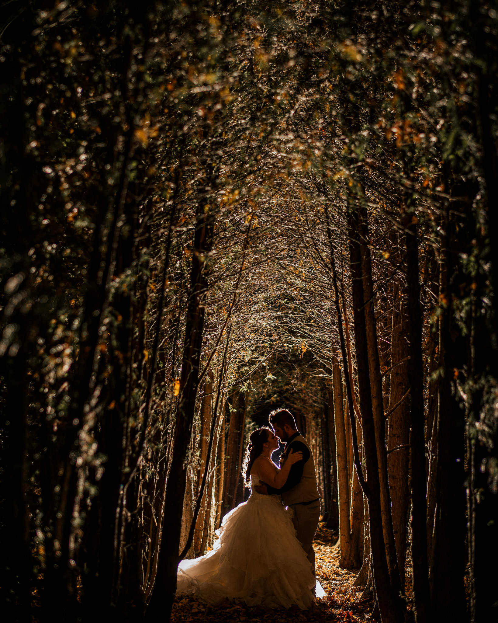 tree-tunnel-night-portrait-001.jpg