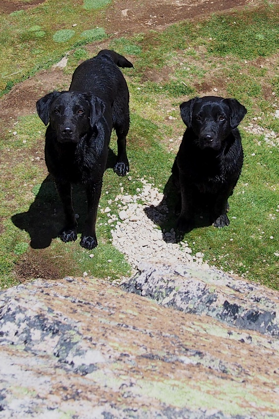 Resident guardians of Refugio Frey. Quick to bark upon arrival, just toss a stick or rock over their heads and they'll become your new best friends