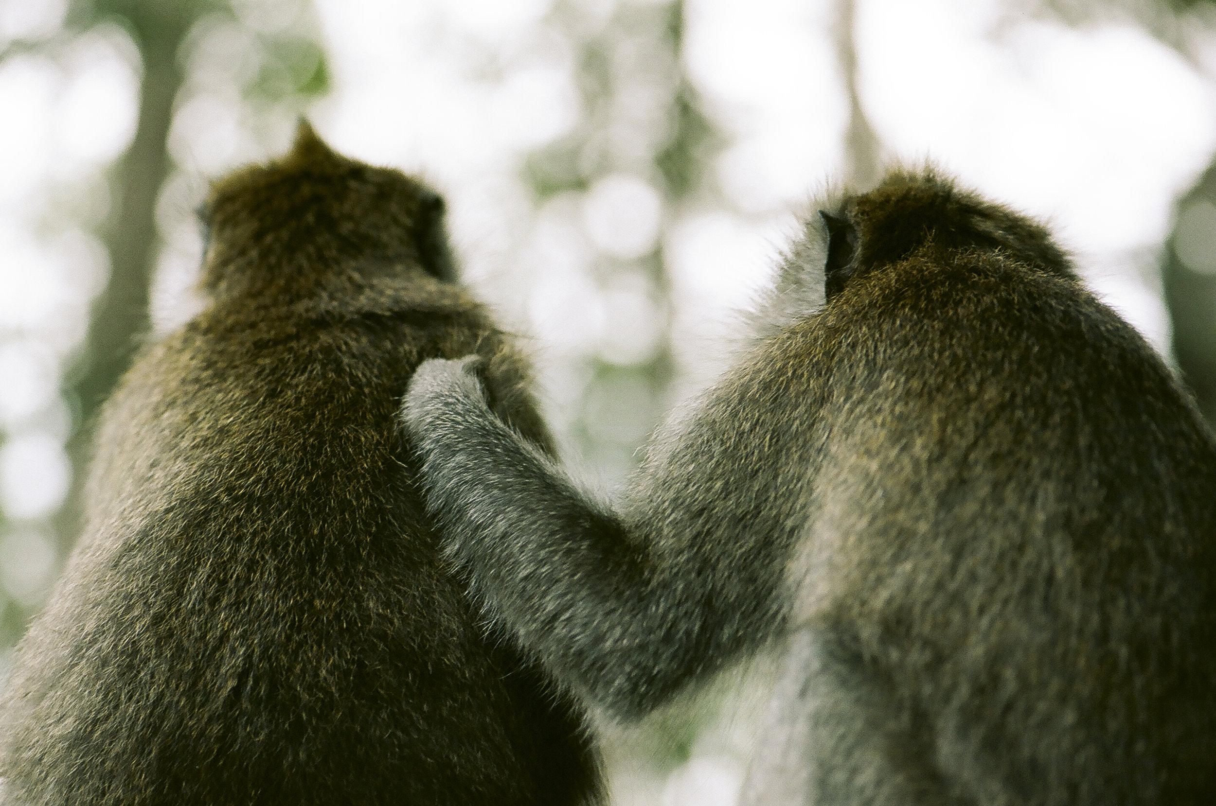 Monkeys_01 copy.jpg