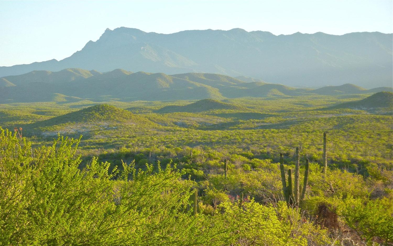 Sierra de La Laguna mountain range