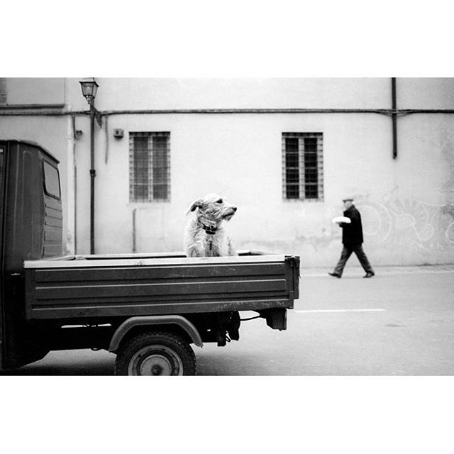 A dog patiently waits for its owner in Lucca, Italy. This photograph is part of my street photography collection at the North Hotel.