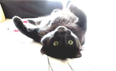 Meet Kuky