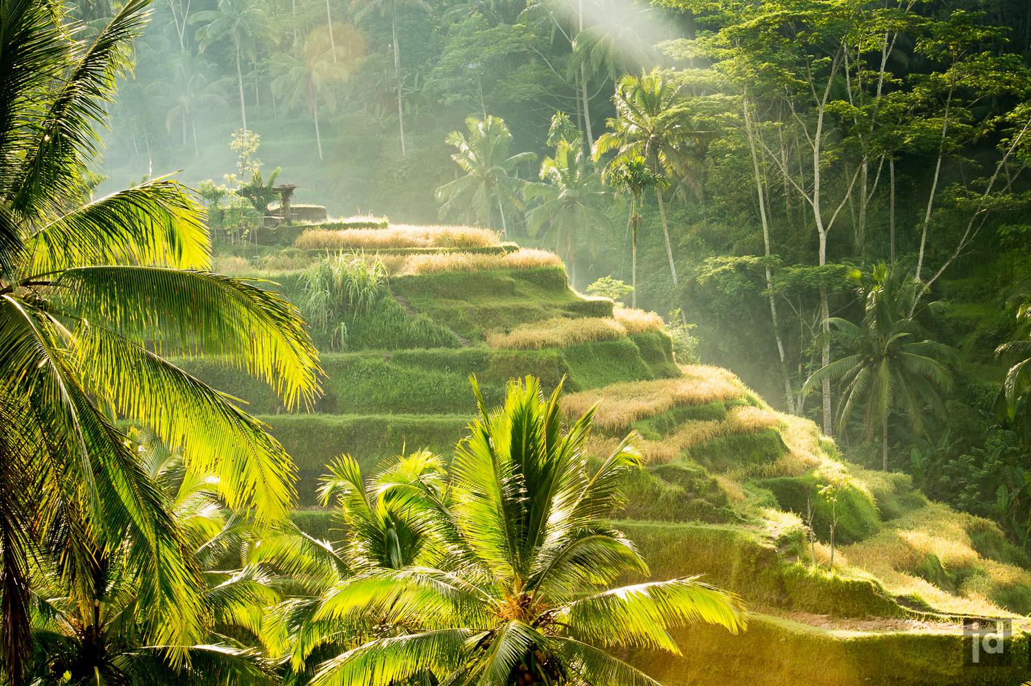 Bali_Indonesia_Photography_Jason_Davis_Images_029.jpg