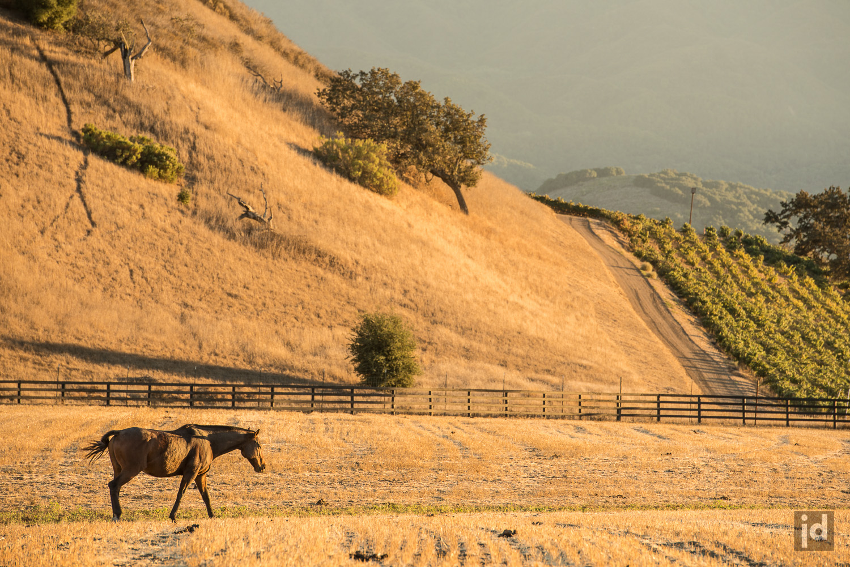 Santa_Ynez_California_USA_Photography_Jason_Davis_Images_010.jpg