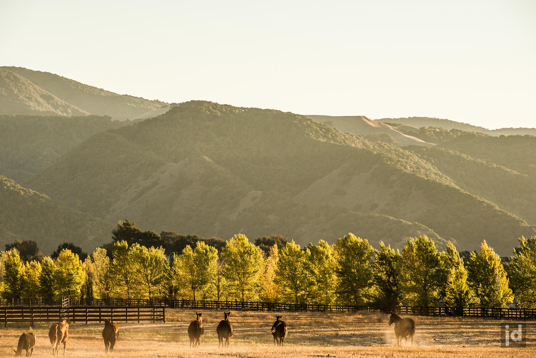 Santa_Ynez_California_USA_Photography_Jason_Davis_Images_011.jpg