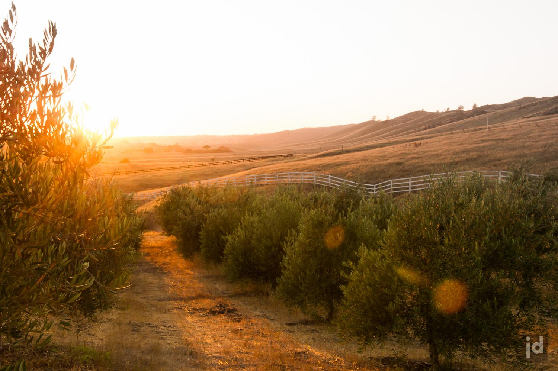 Santa_Ynez_California_USA_Photography_Jason_Davis_Images_028.jpg