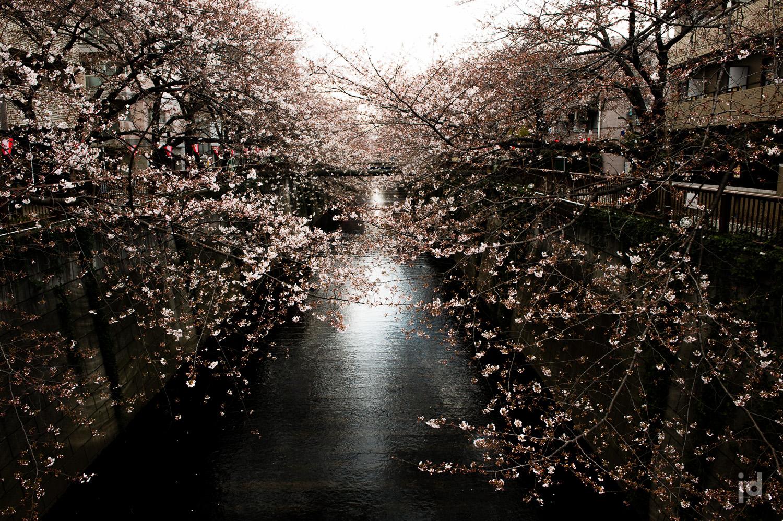 Japan_Photography_Jason_Davis_Images_007.jpg