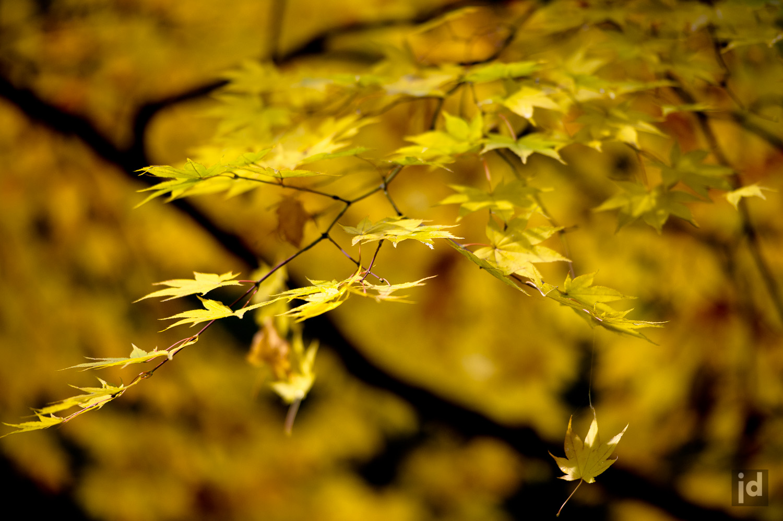 Japan_Photography_Jason_Davis_Images_013.jpg