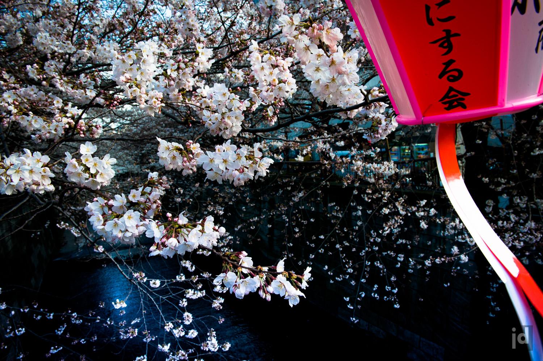 Japan_Photography_Jason_Davis_Images_019.jpg