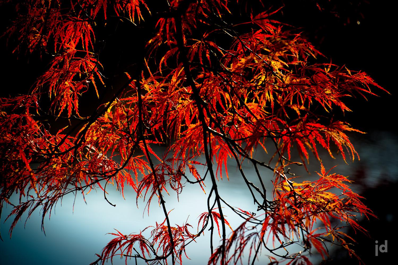 Japan_Photography_Jason_Davis_Images_035.jpg