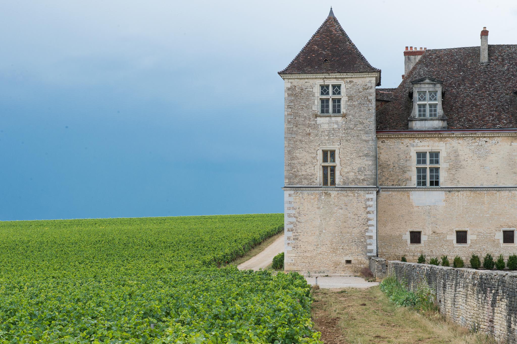 Jason-Davis-Images-Burgundy-0006.jpg