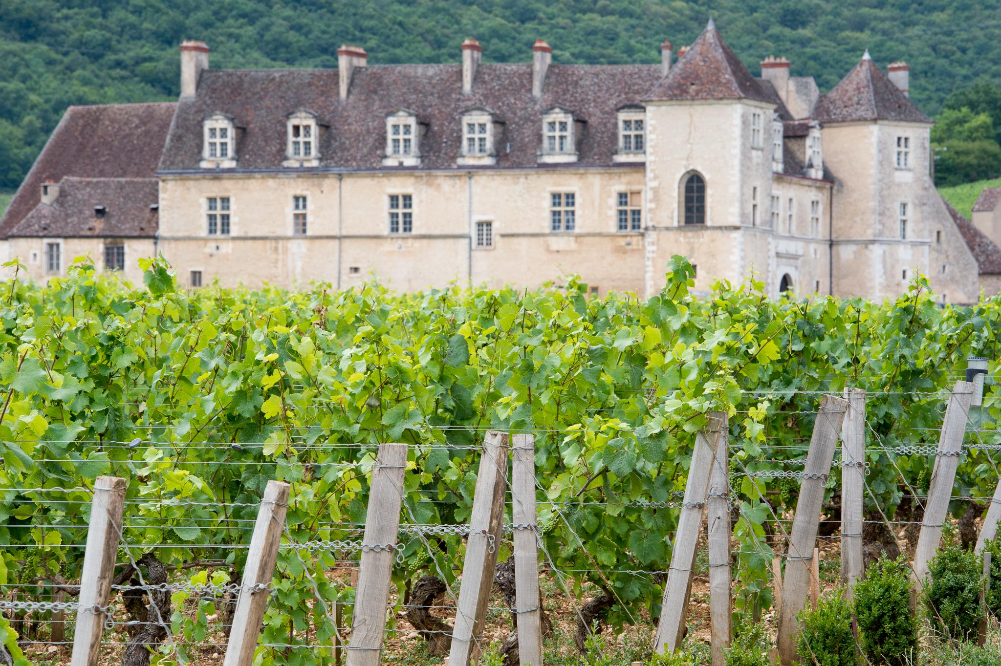 Jason-Davis-Images-Burgundy-0012.jpg
