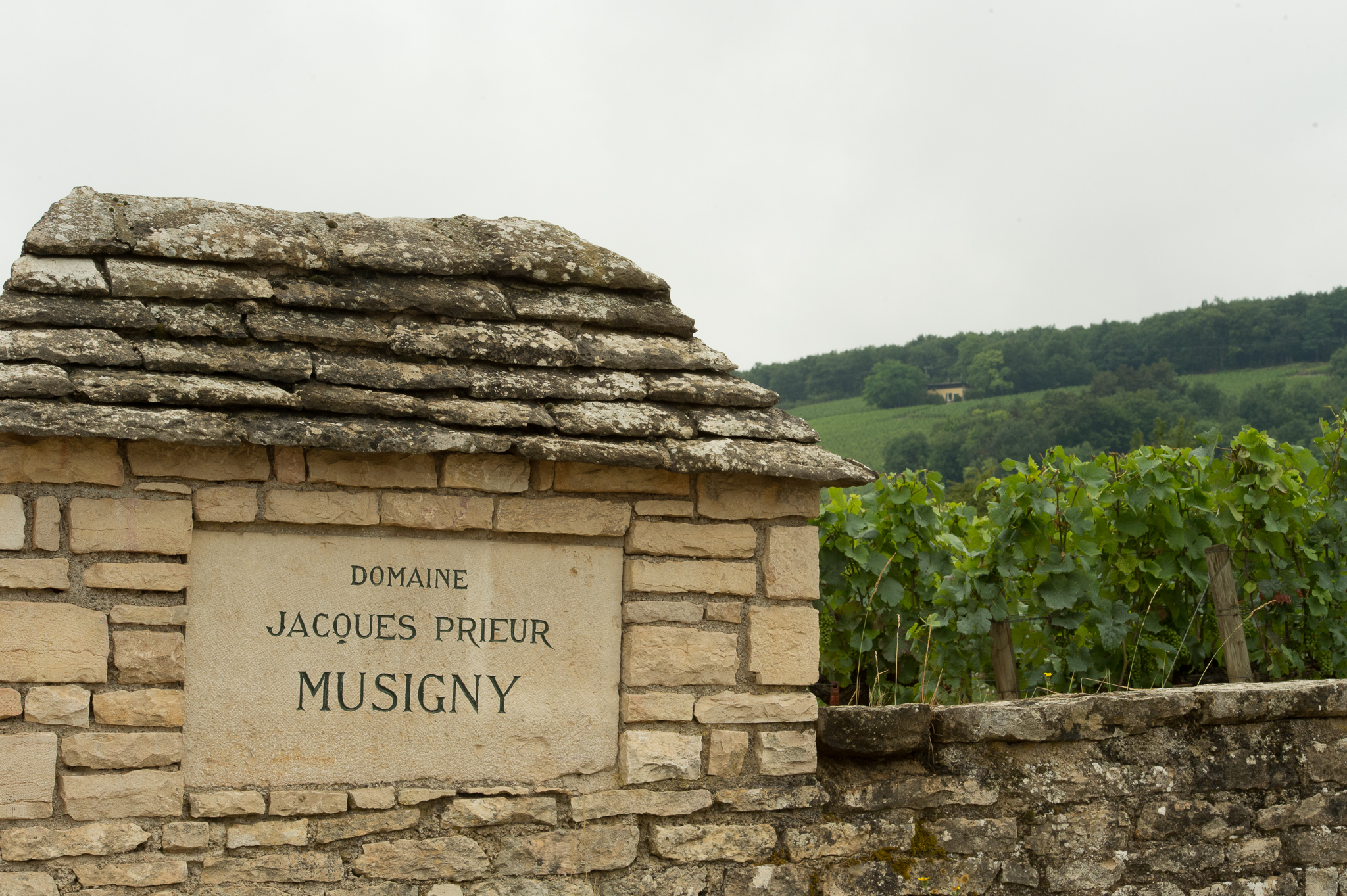 Jason-Davis-Images-Burgundy-0029.jpg