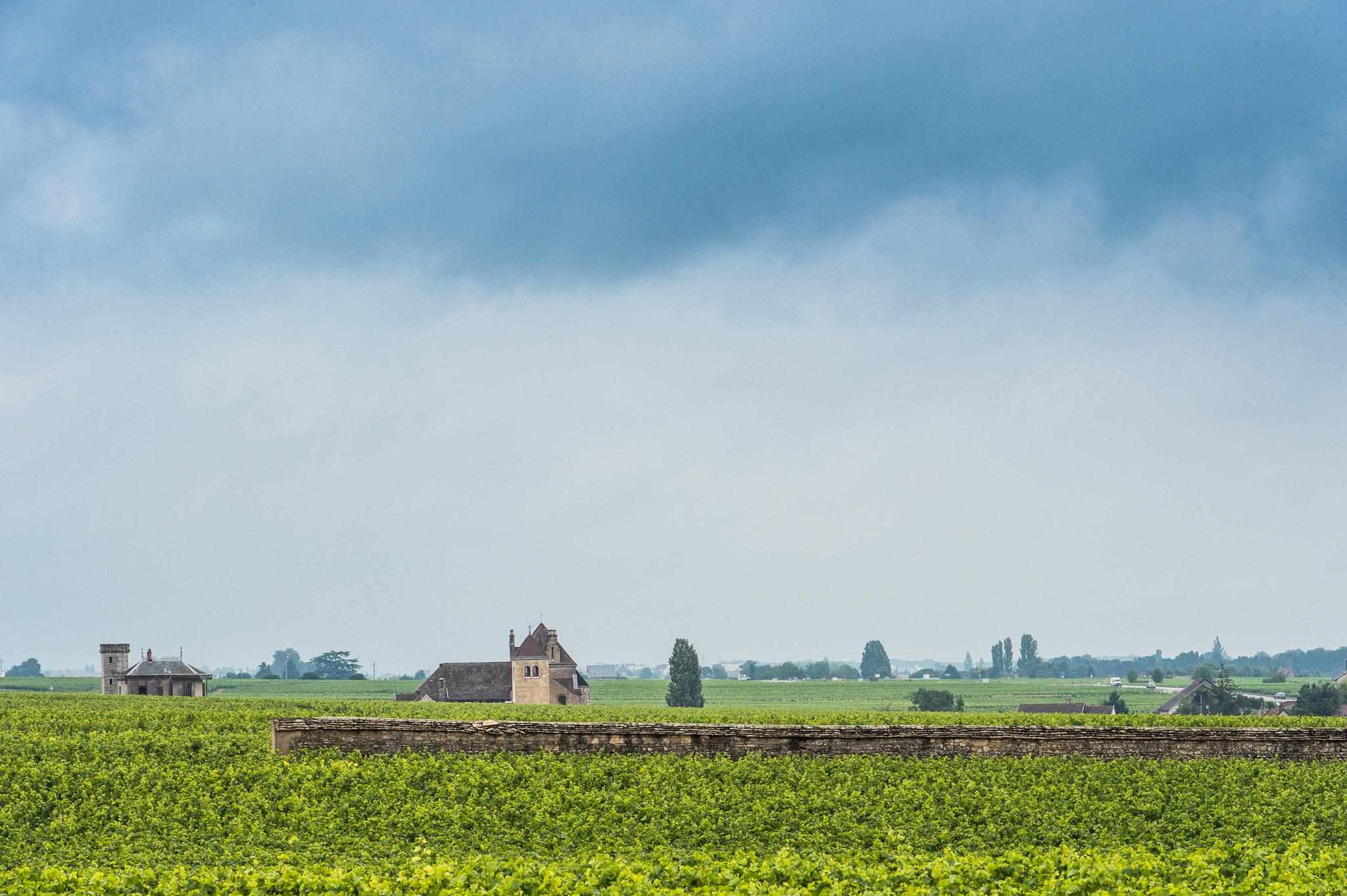 Jason-Davis-Images-Burgundy-0030.jpg