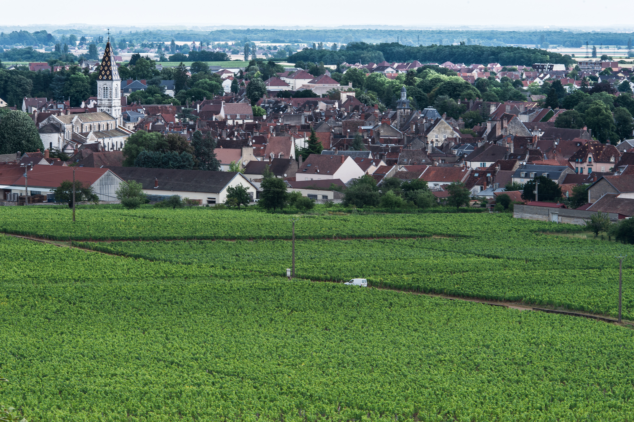 Jason-Davis-Images-Burgundy-0039.jpg