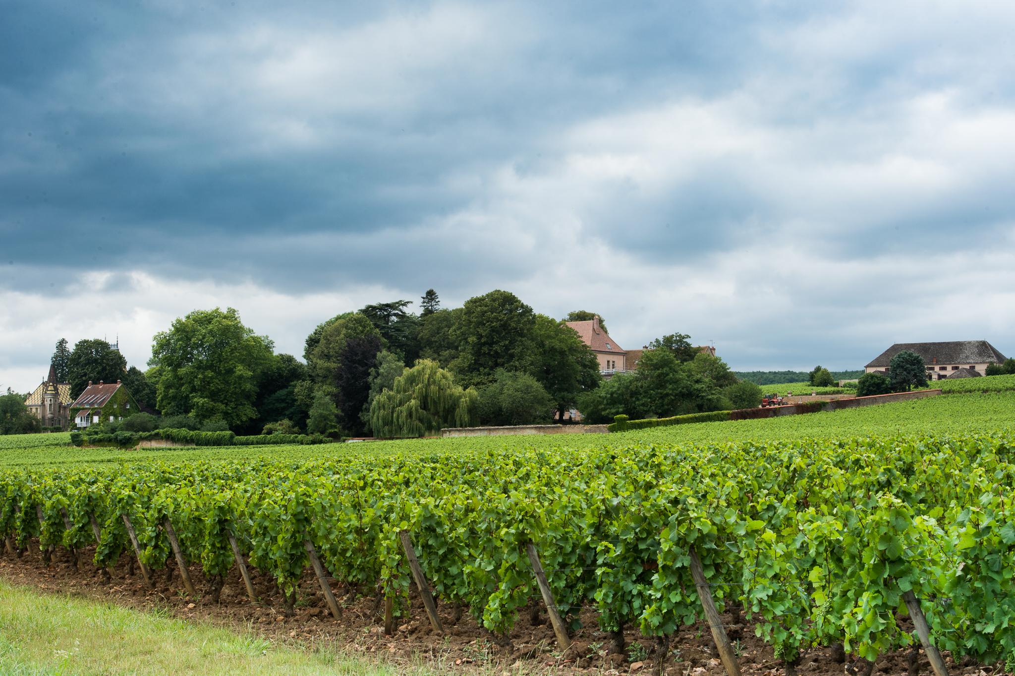 Jason-Davis-Images-Burgundy-0041.jpg