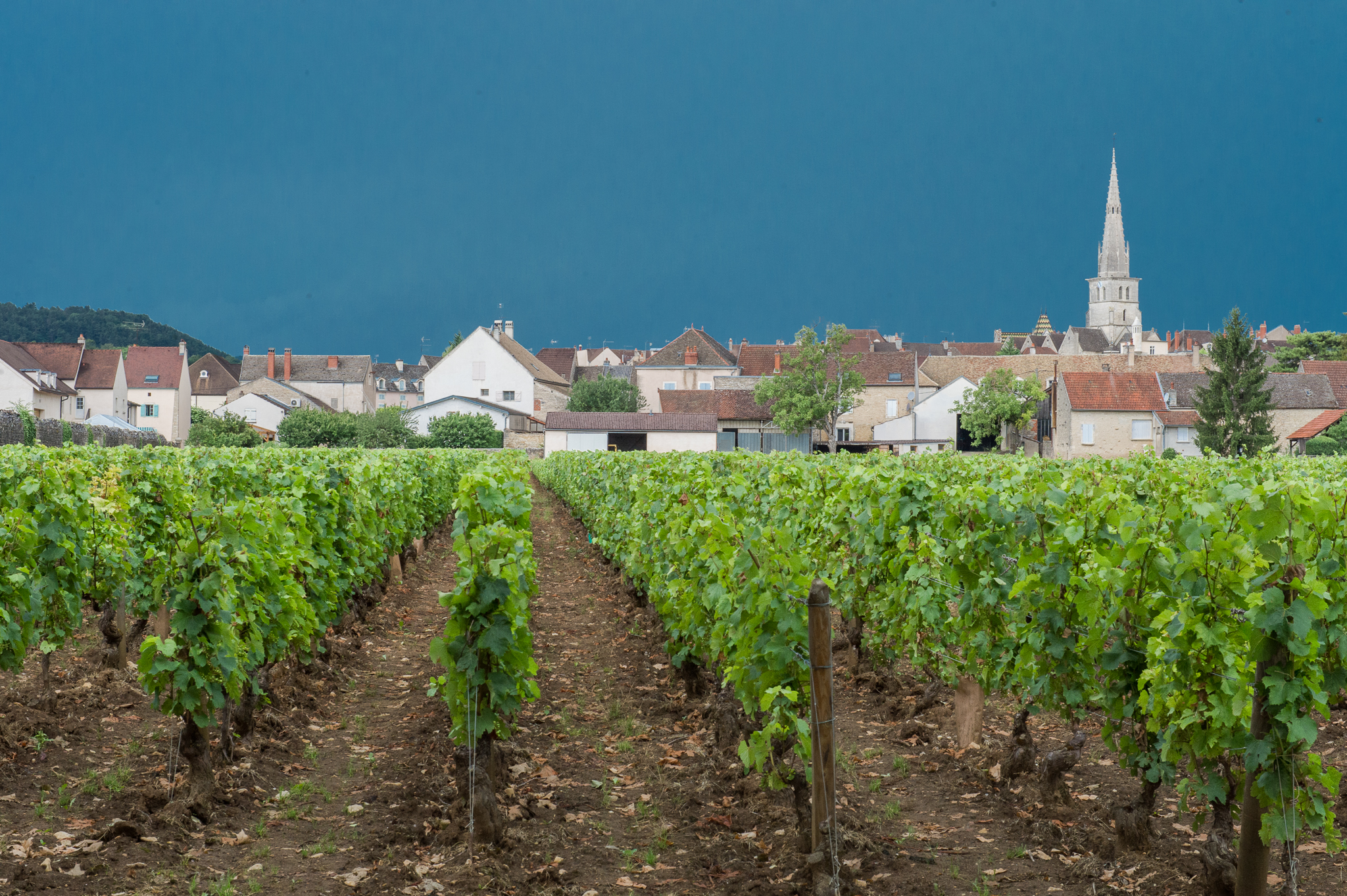 Jason-Davis-Images-Burgundy-0078.jpg