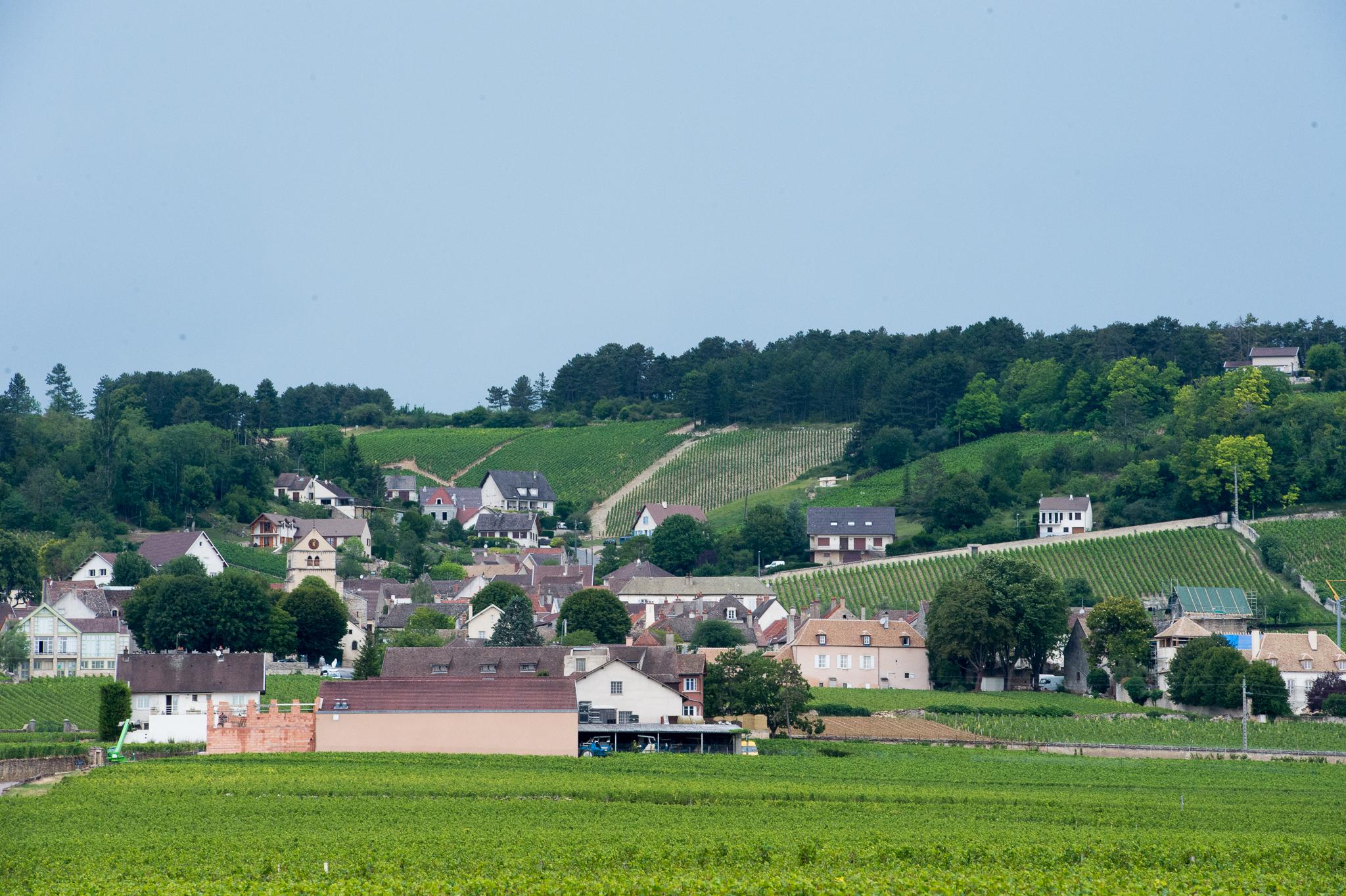 Jason-Davis-Images-Burgundy-0079.jpg