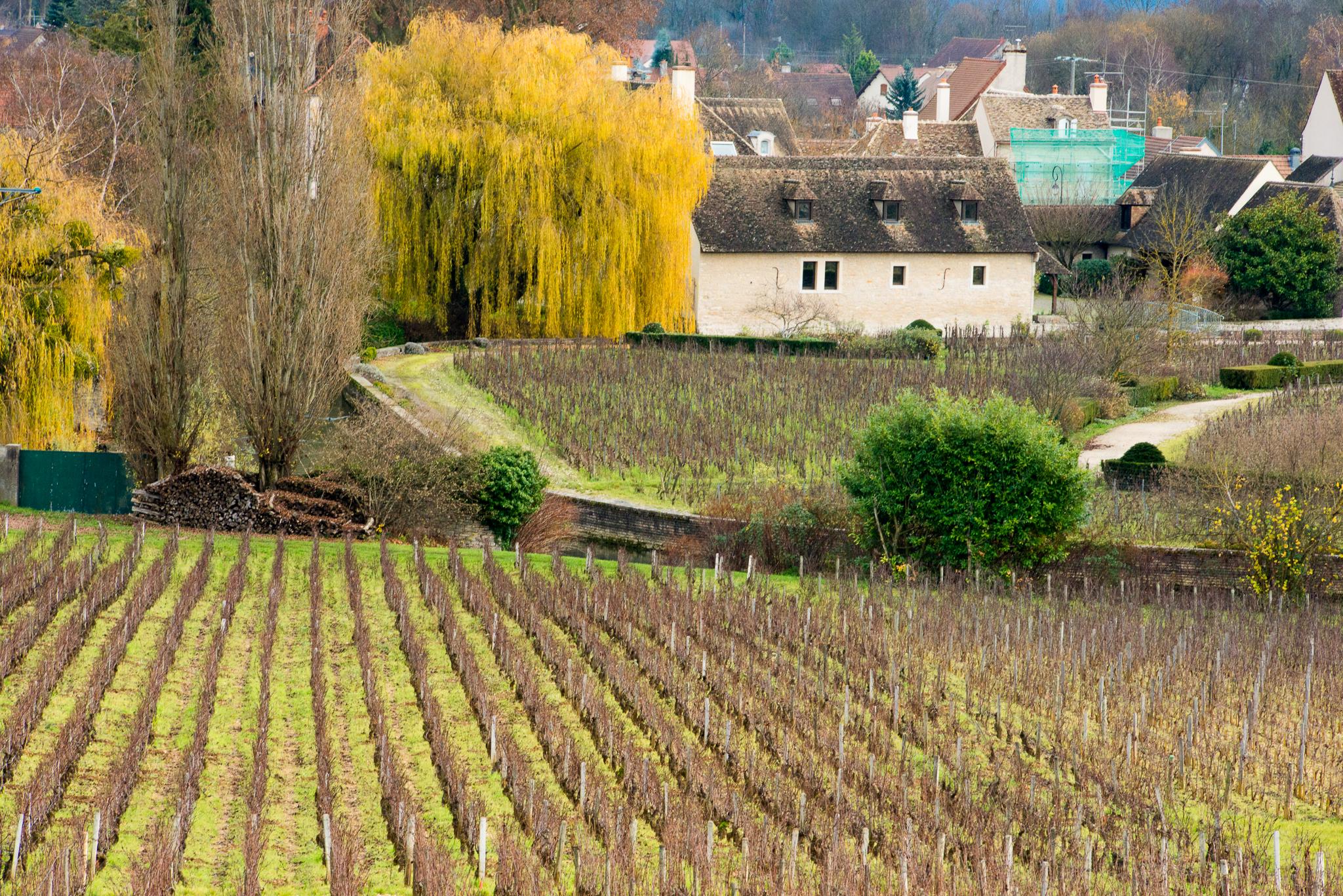 Jason-Davis-Images-Burgundy-0096.jpg
