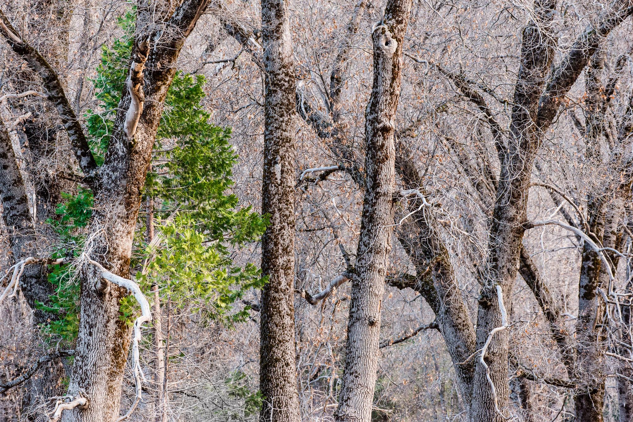 Jason-Davis-Images-Yosemite-0005.jpg