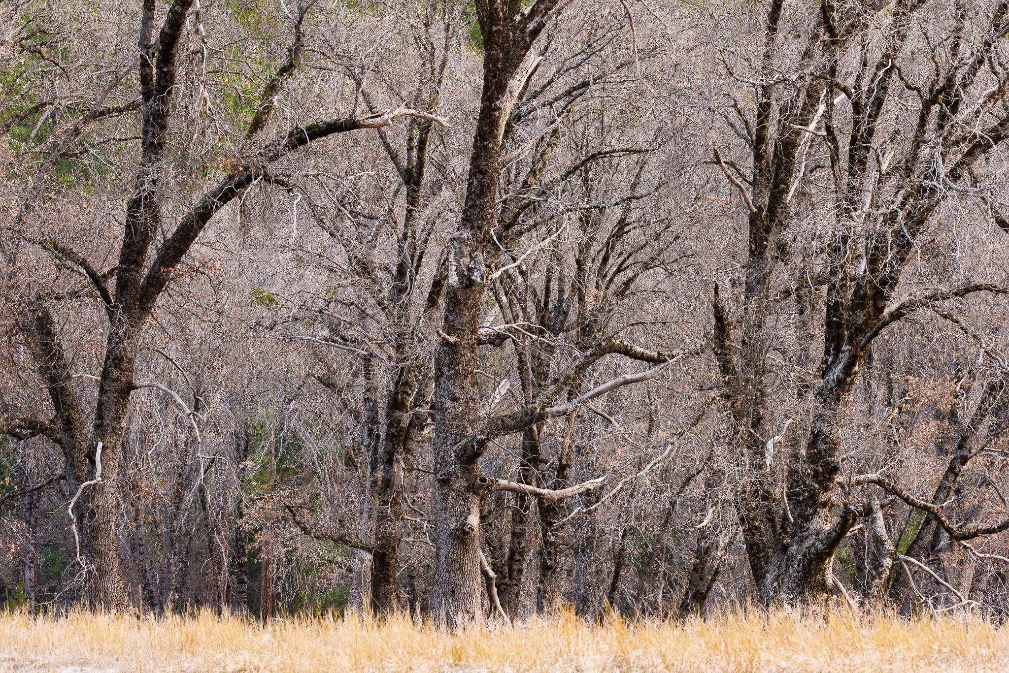 Jason-Davis-Images-Yosemite-0012.jpg