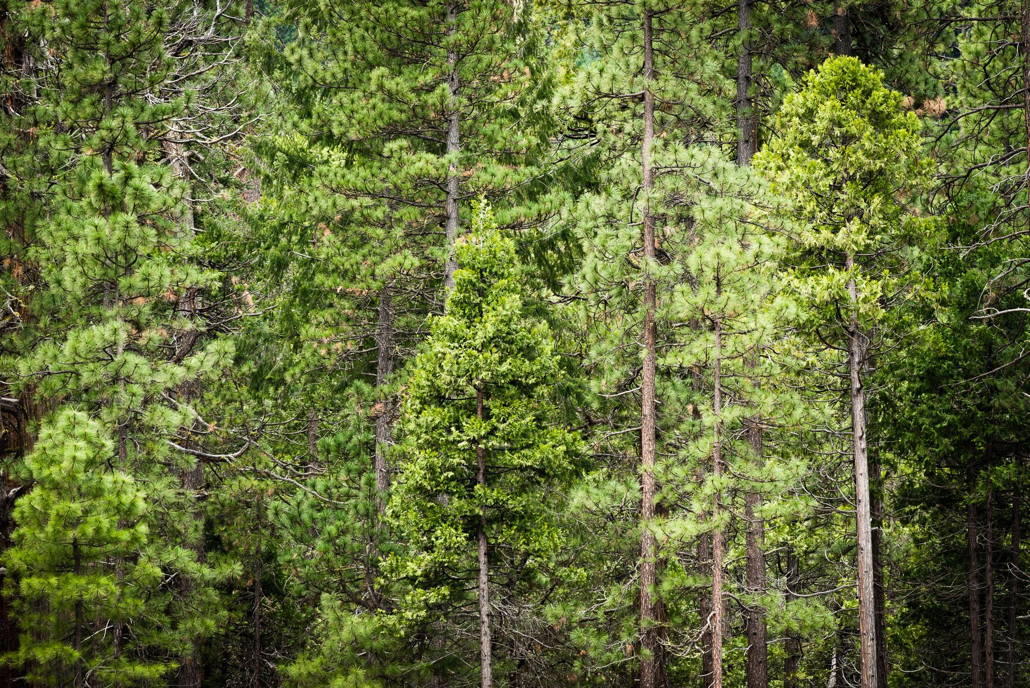 Jason-Davis-Images-Yosemite-0023.jpg