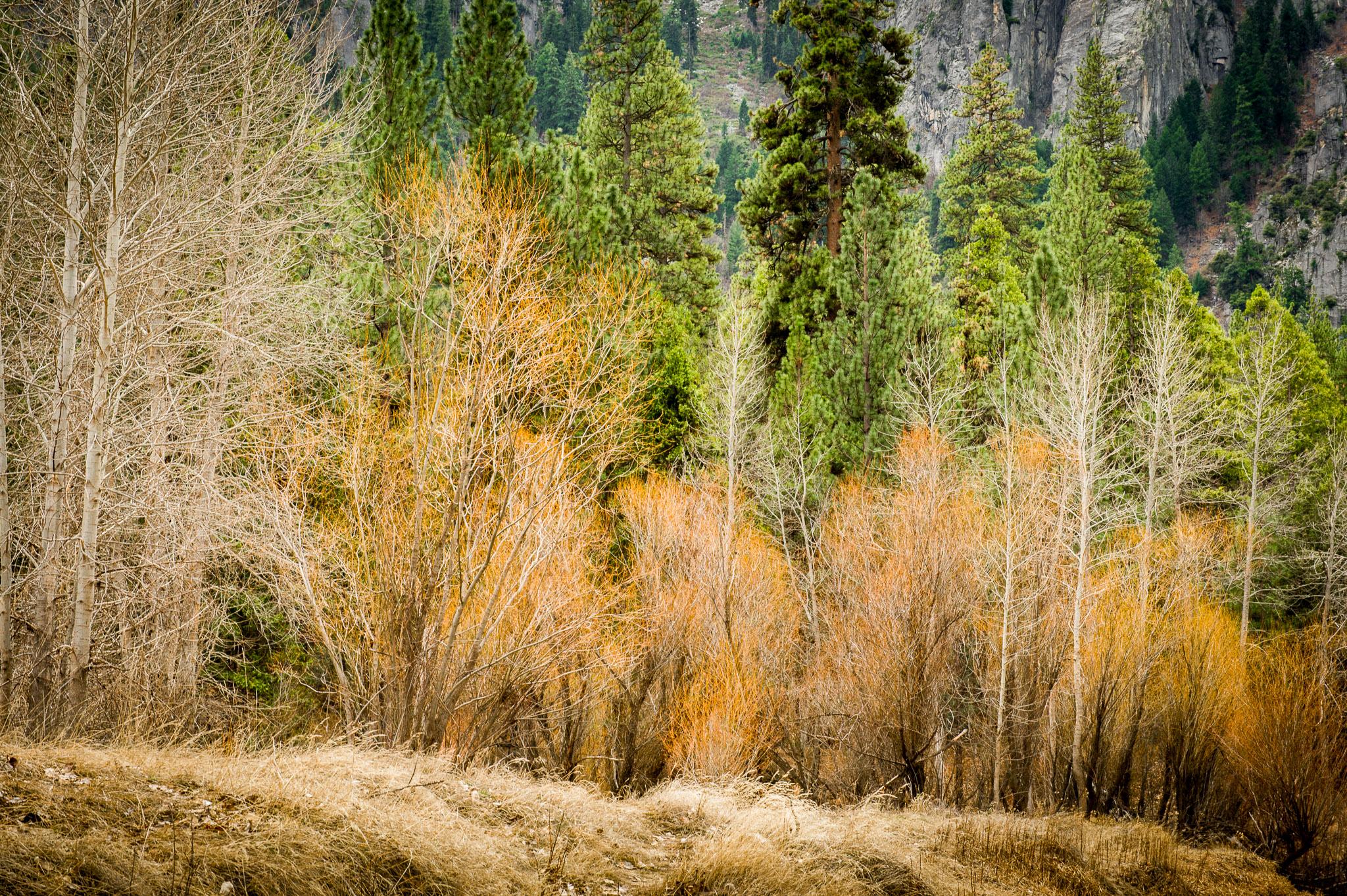 Jason-Davis-Images-Yosemite-0028.jpg