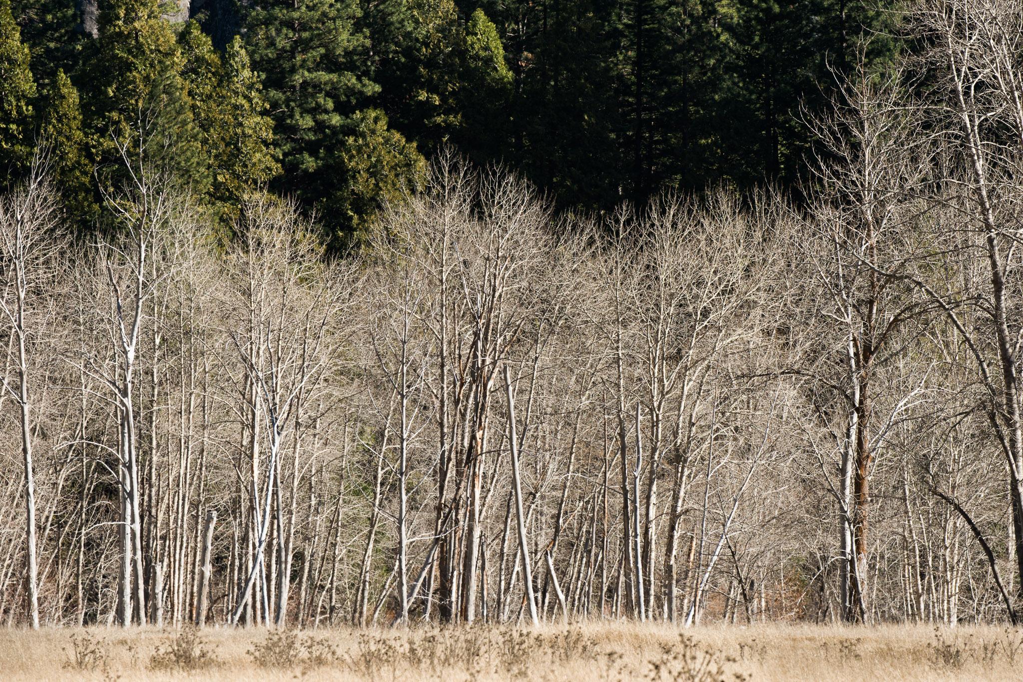 Jason-Davis-Images-Yosemite-0029.jpg