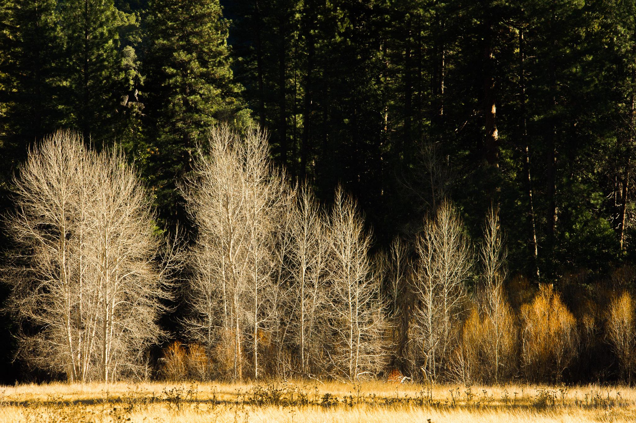 Jason-Davis-Images-Yosemite-0032.jpg
