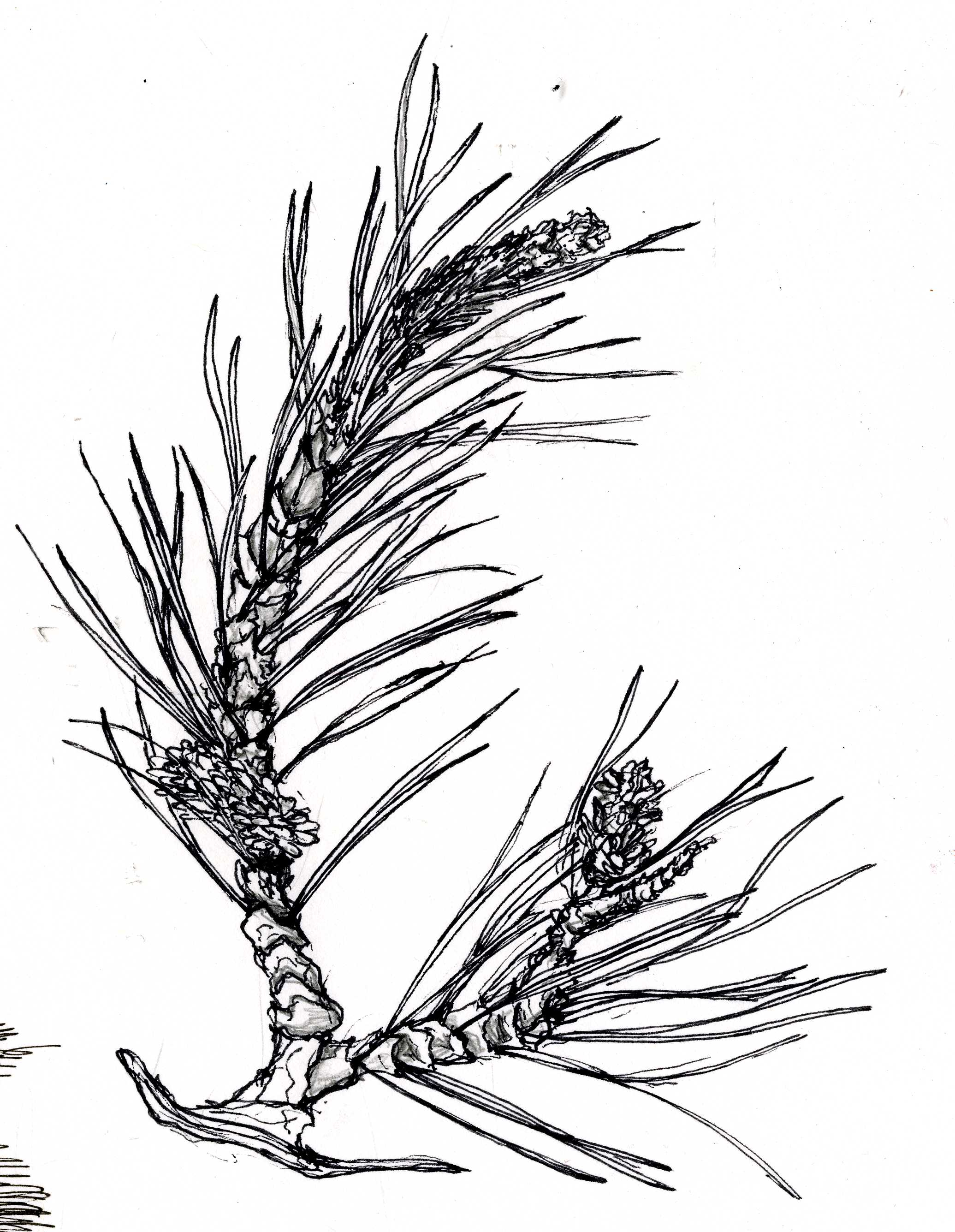 tree011.jpg