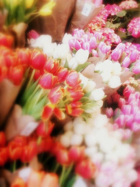 12+FLOWERS+Tulips+photo+Doreen+Creede+IMG_2426+-+soft+cinemascope.jpg