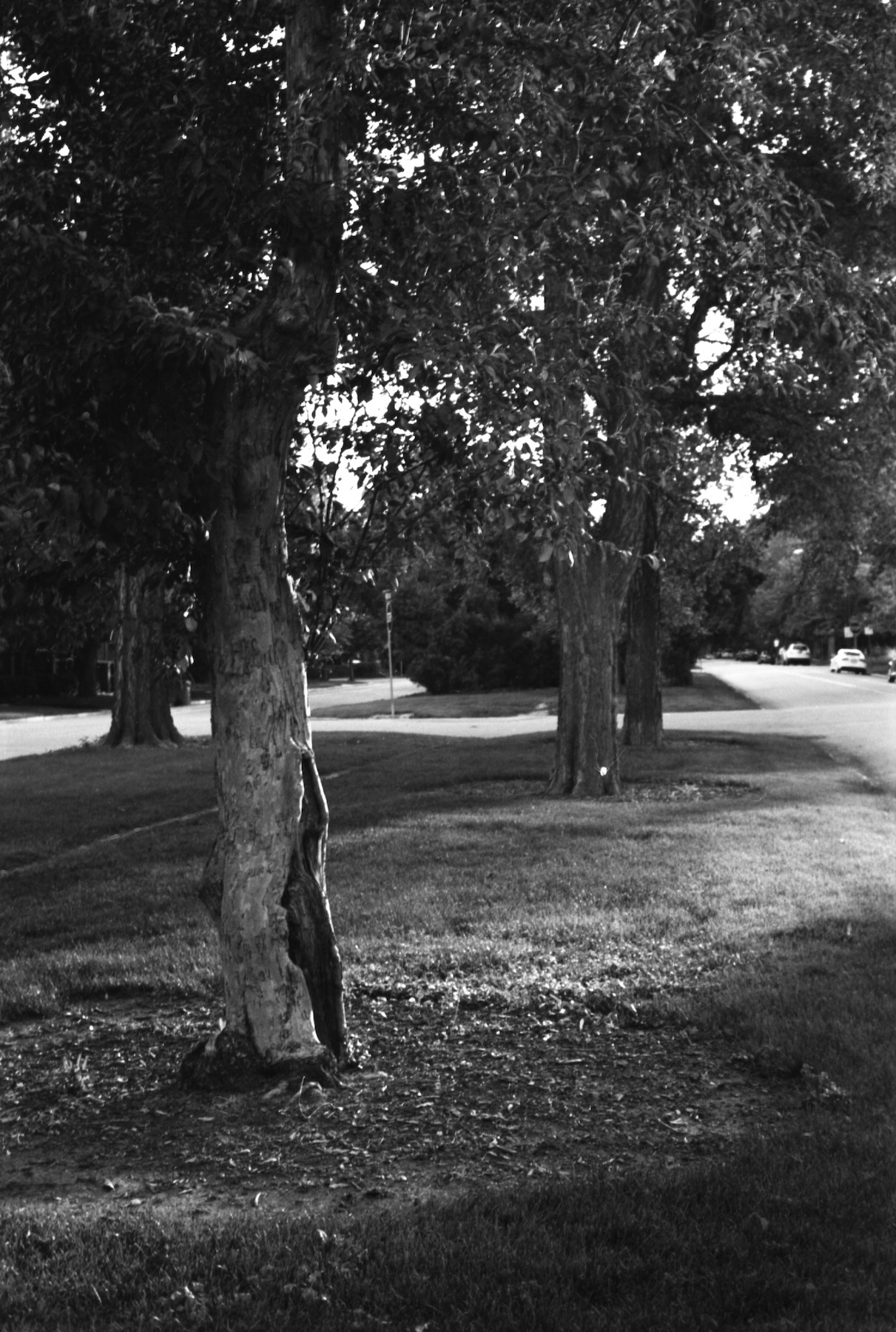 Photo by @ShellySometimes   Nikon F100 with Nikkor 50mm lens at 80 ISO  Developed in Ilfosol 3, 1+9, at 68ºF for 5 minutes. Gentle agitation first minute, four inversions at the top of every minute after. Water-only stop bath, fixed for five minutes with Rapid Fixer.