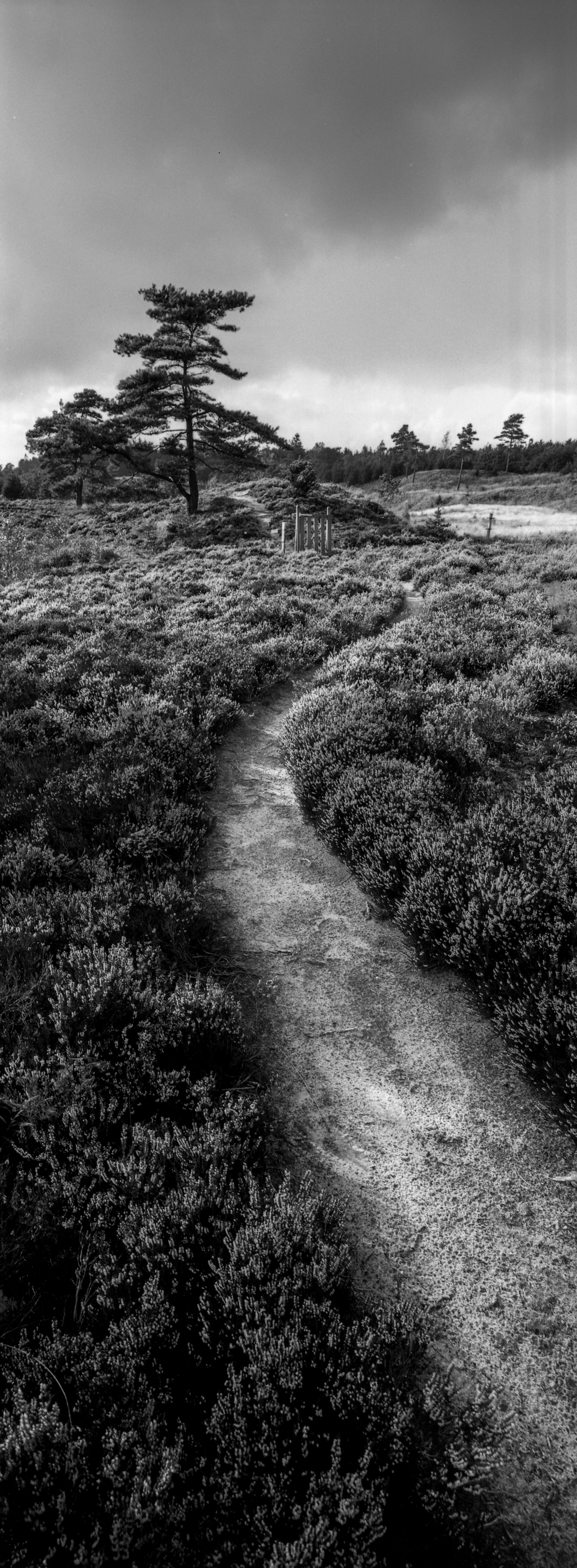 Photo by Martin Tomes   Shot with a Hasselblad Xpan and 30mm f/5.6 lens at 80 ISO  Home processed at Fomadon Excel, stock dilution at at 23°C, for 7 minutes with 30s agitation first minute and 10s every minute after