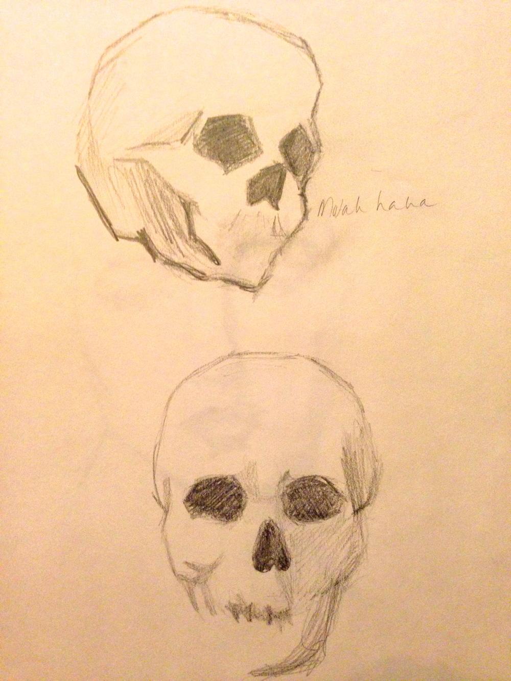 Study of skulls no. 2