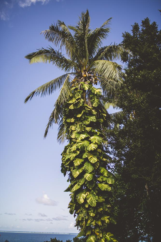 hawaii-wedding-videographer_07.jpg