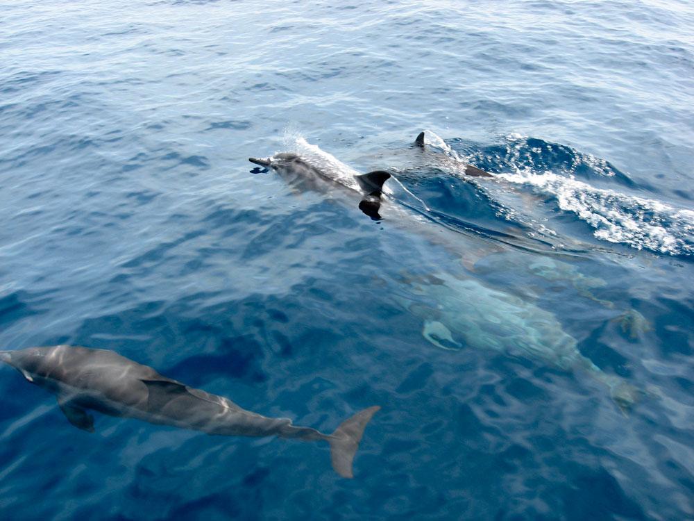 Dolphin Watching 1.jpg